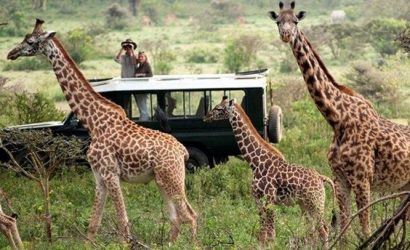 Masai Mara and gorilla trekking