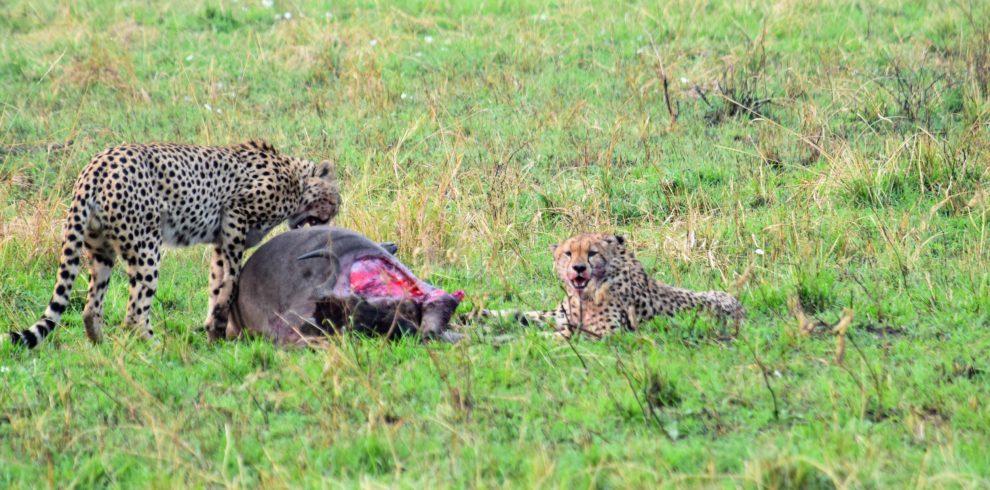 5 day Masai Mara Safari