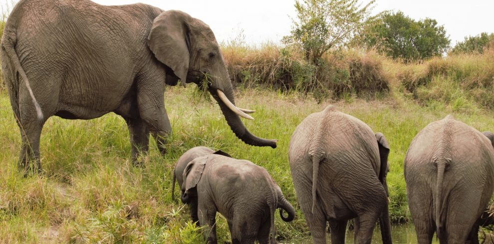 amboseli safari tours