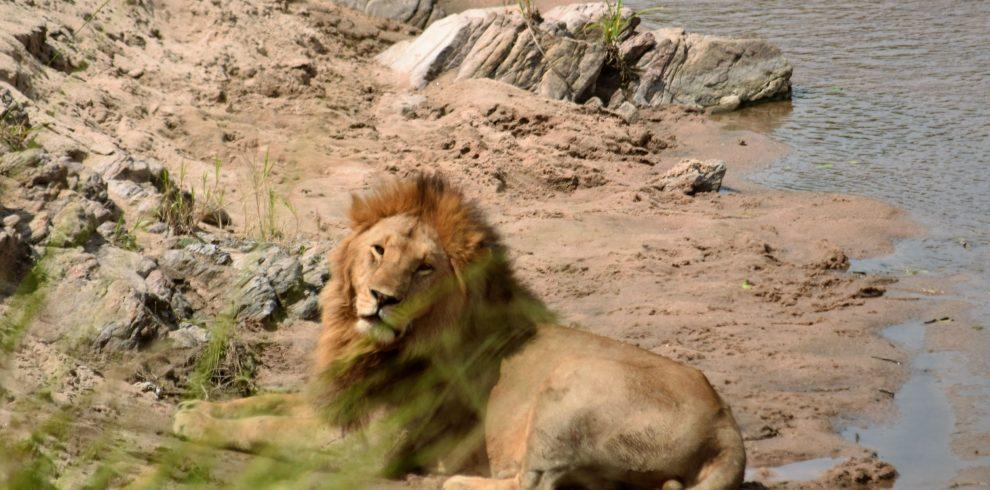 masai mara and samburu safari