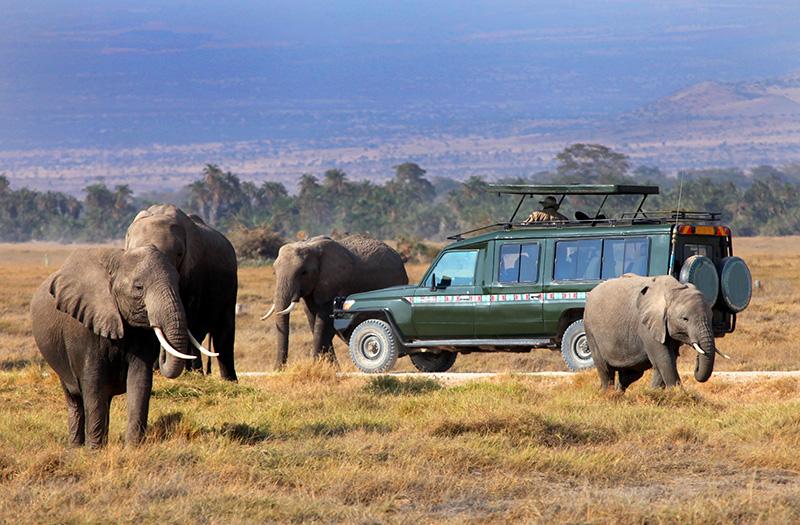 5 Days Bwindi Gorilla safari & Queen Elizabeth wildlife tour