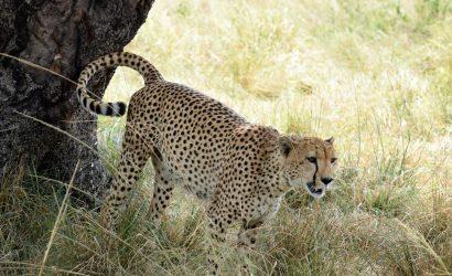 serengeti and ngorongoro safari
