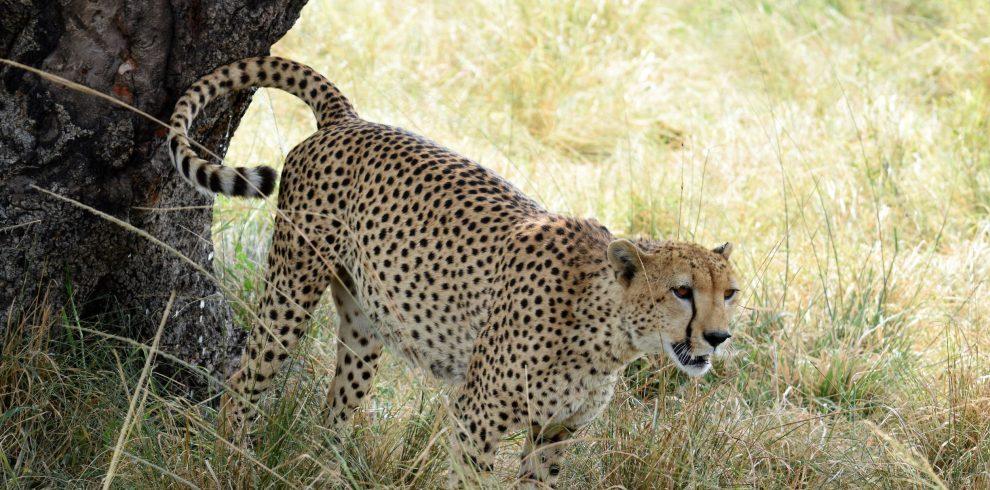 masai mara and serengeti safari