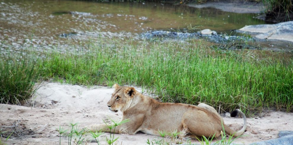 masai mara serengenti safari