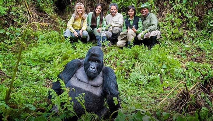 Masai Mara and Gorilla trekking Safari