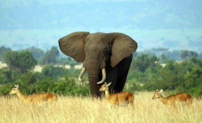 12 Days Uganda Gorillas and Wildlife Safari