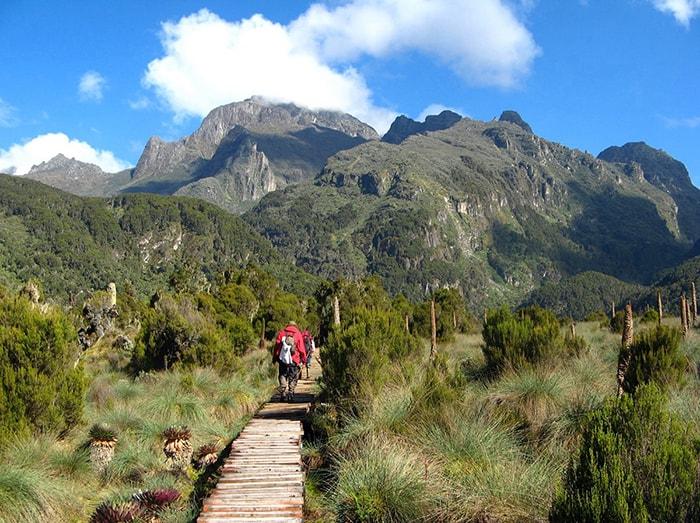 Uganda safari Rwenzori Mountains National Park