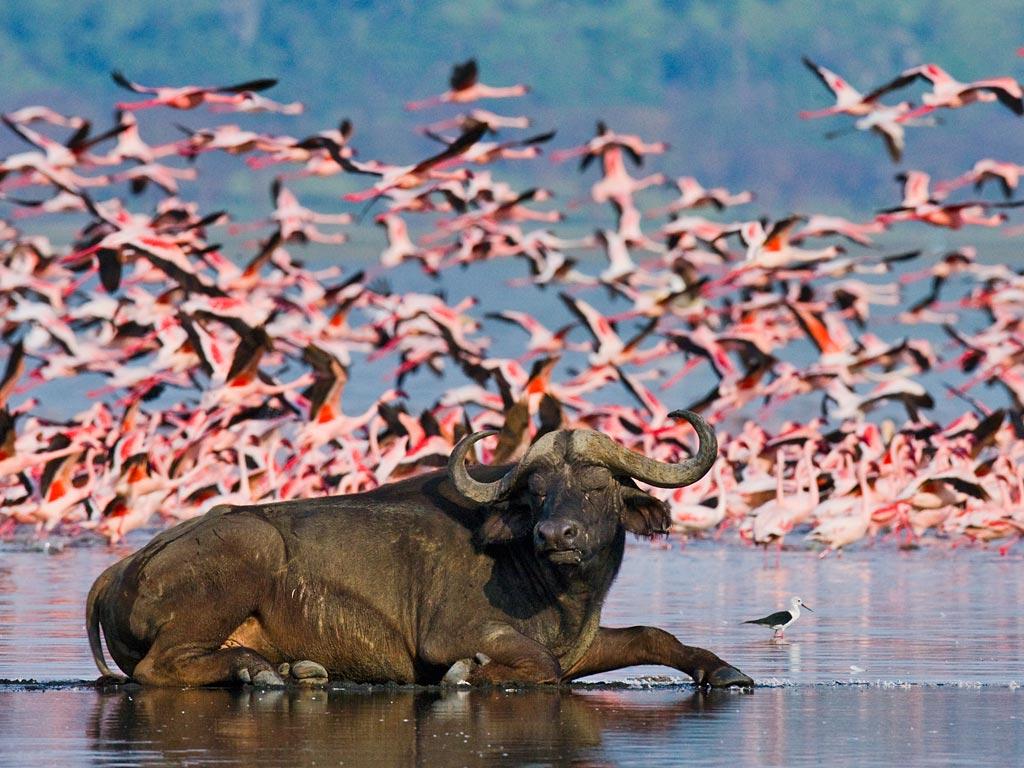 Lake-Nakuru