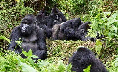 4 Day Gorilla Tracking Rwanda and Lake Kivu