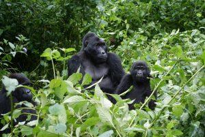 rwanda safari tour