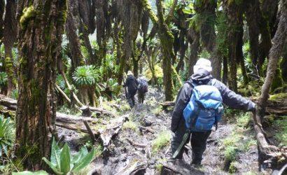 rwenzori-trekking-ruwenzori-60