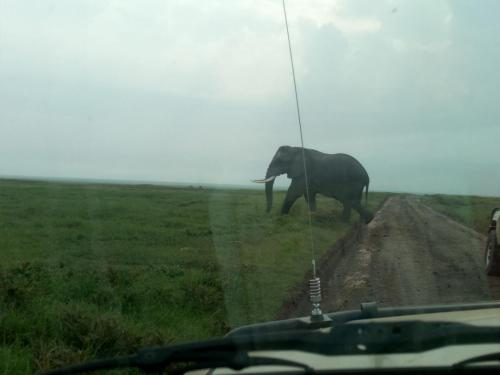 Masai Mara Safari Packages