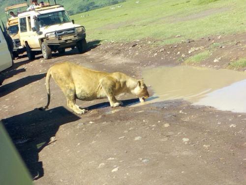 Masai Mara Safari Packages