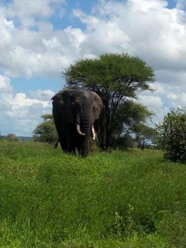 Masai Mara Safari Booking