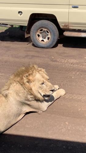 Masai Mara holiday packages