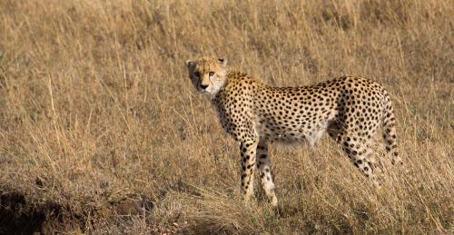 Masai Mara Safari Holiday Packages