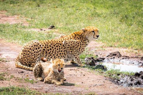 Masai Mara Safari Holidays
