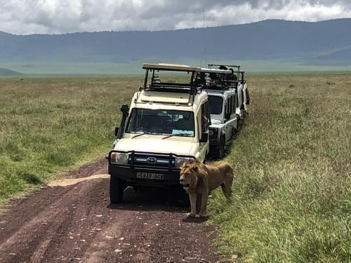 Masai Mara Safari Holidays