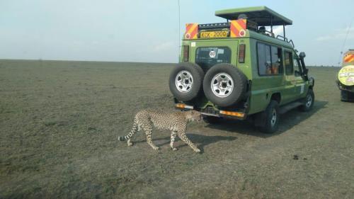 masai mara safari holidays 2020